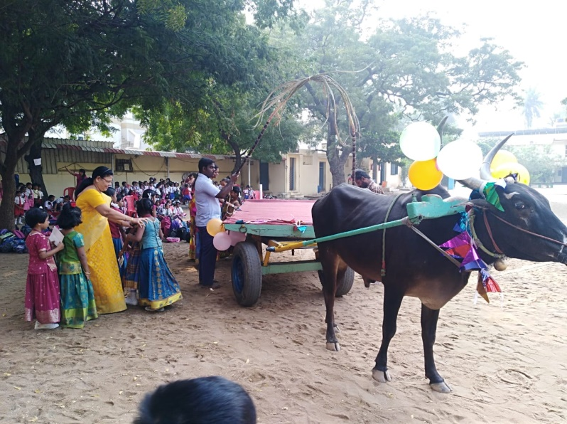 Pongal January 2019 What a delight for the children of St. John's to be able to see a bullock cart in the campus on the feast of Pongal (Harvest Festival) They were very happy to be taken for a free ride