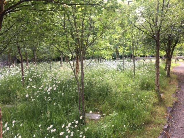 Diseart Garden